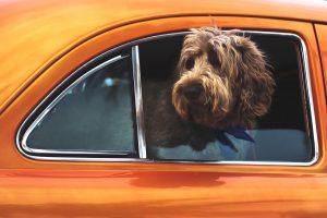 Como viajar en coche con perros, gatos y mascotas